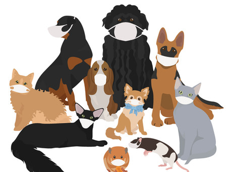 Can My Dog/ Cat Get Coronavirus?