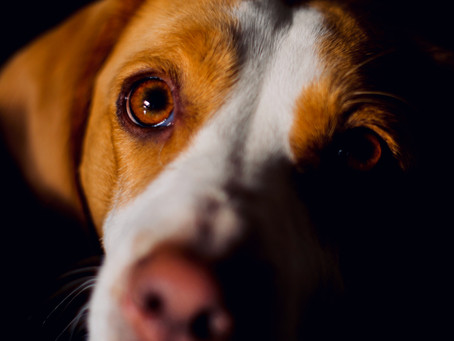 Is it Okay to Punish Your Dog?