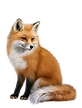 fox-png-2.png