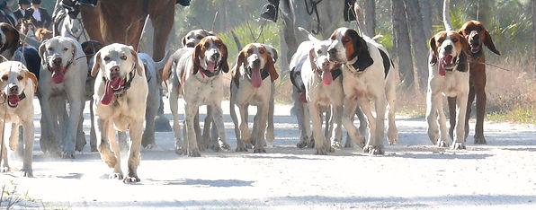 hound pic.JPG