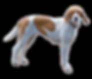 english-foxhound.png