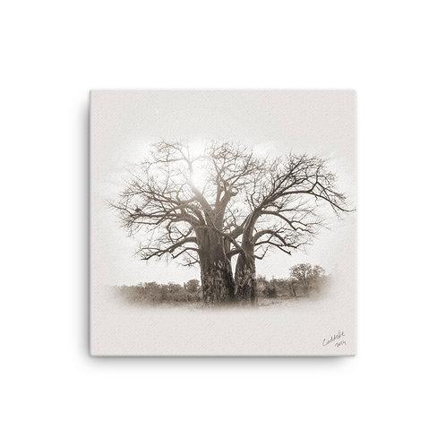 Caddelle Baobab Canvas 4