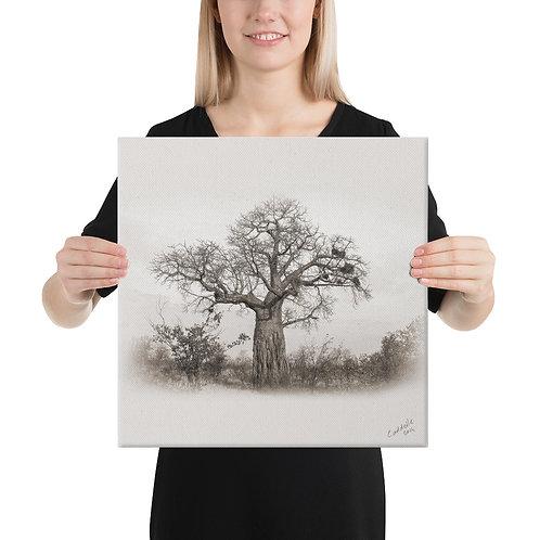 Caddelle Baobab Canvas 2
