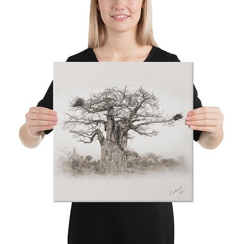 Caddelle Baobab Canvas 1