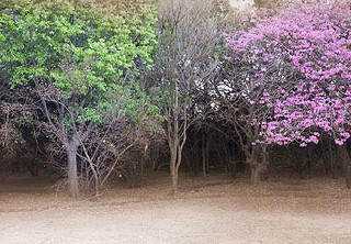 jhb botanical gardens 123bsample.jpg