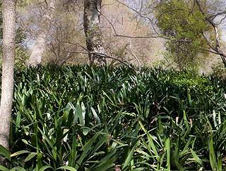 gardenscape2a.jpg
