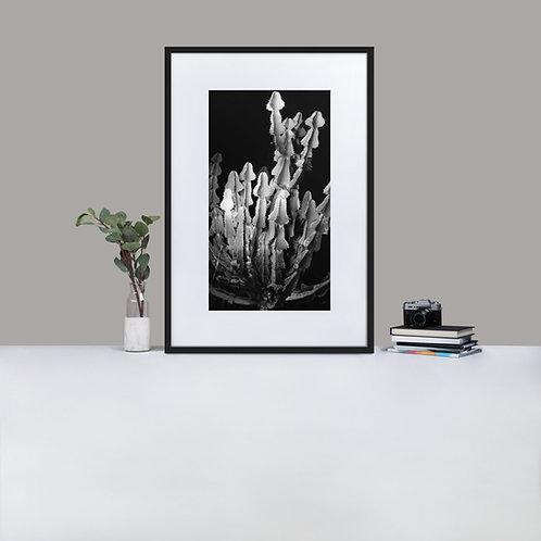 Aloe 4 Print and framed