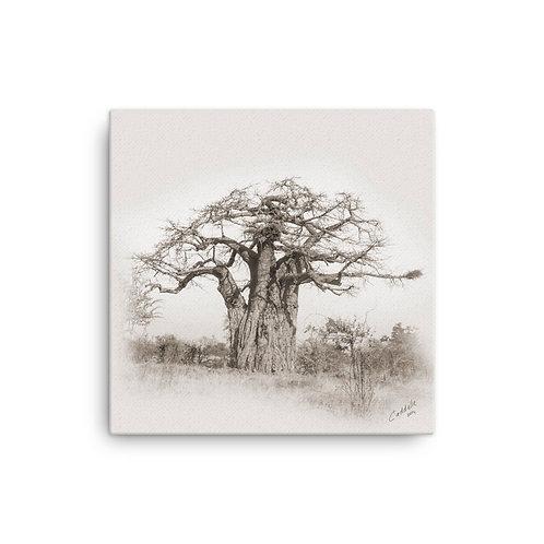 Caddelle Baobab Canvas 3