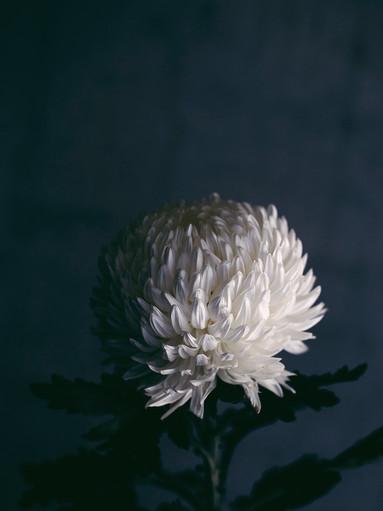 vases-bloomin.8584.jpg