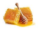 Honeycombs in closeup.jpg