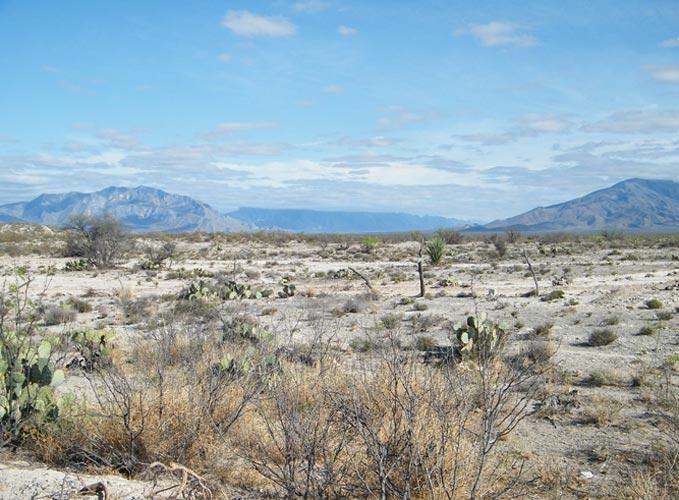 Coahuila Desert