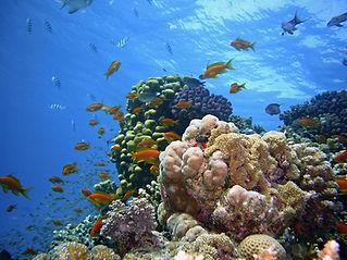 Red Sea Corals, Egypt