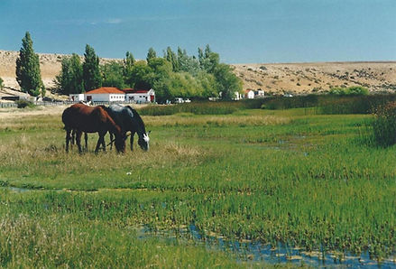 Las Horquetas, Patagonia, Argentina.jpg