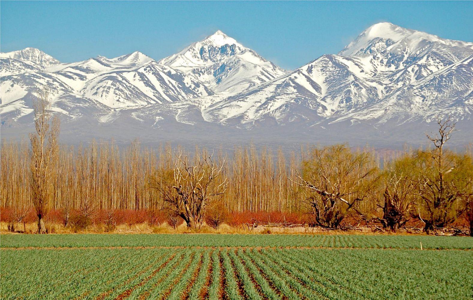 Maipú vineyard, Mendoza