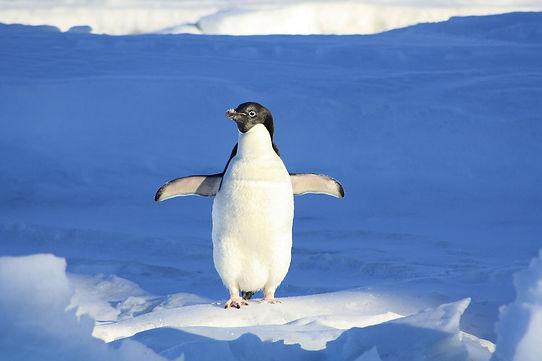 JW_penguin-56101_1920.jpg