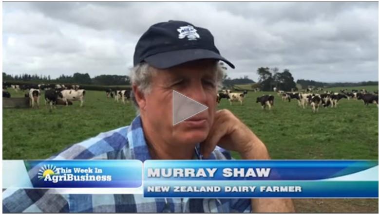 Murry Shaw - New Zealand Dairy Farmer