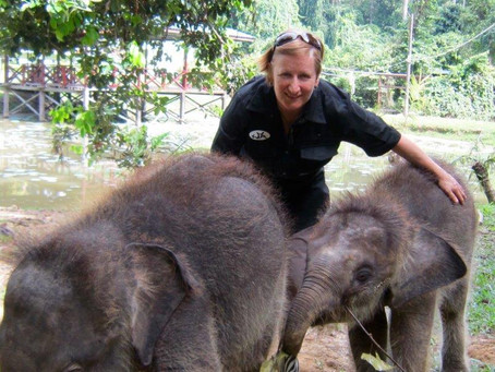 """""""Food with a Story"""" helps save Baby Pygmy Elephants"""