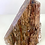 Thumbnail: Petrified Wood Free Form