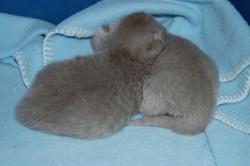 Kimba Babies 10 days old 15.5.2014