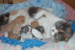 Sasha+Babies+9+days+old