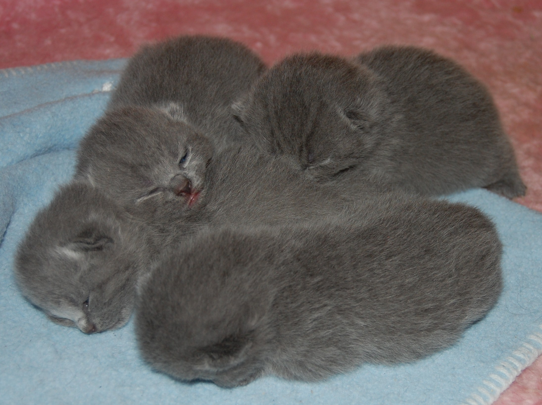 Bonnie+babies+1+week+old+001