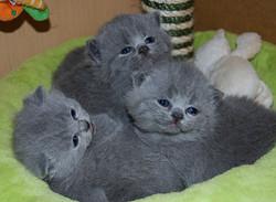 Bonnies+babies+3+weeks+old+002