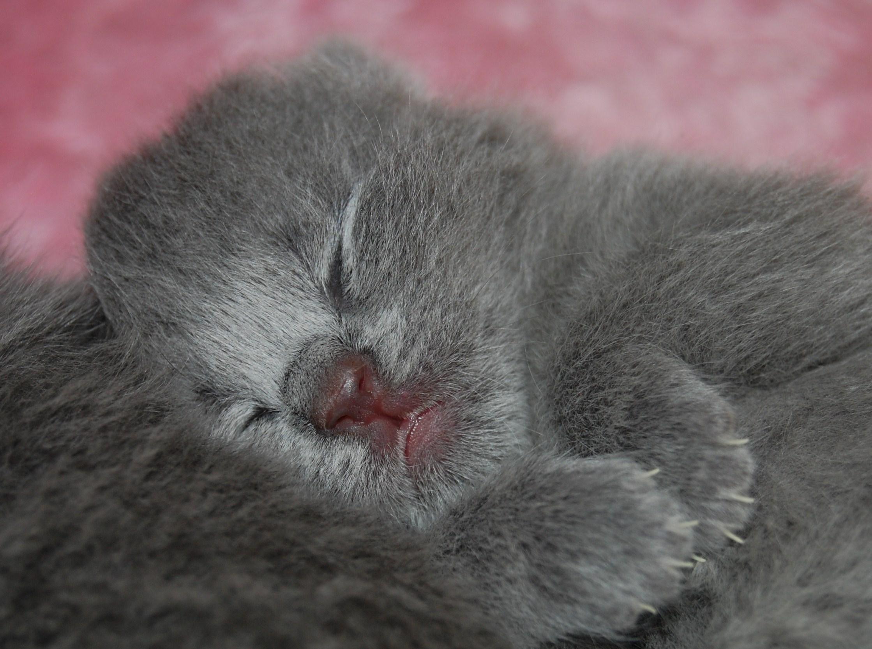 Bonnie+Baby+3+days+old+4.11.2012