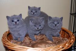 Bonnie+babies+5+weeks+old+6.12.2012+019