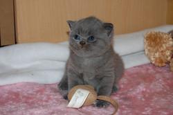 Saffi+baby+3.5+weeks+29.11.2012+006