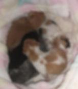 Indie babies (13.4.20).jpg