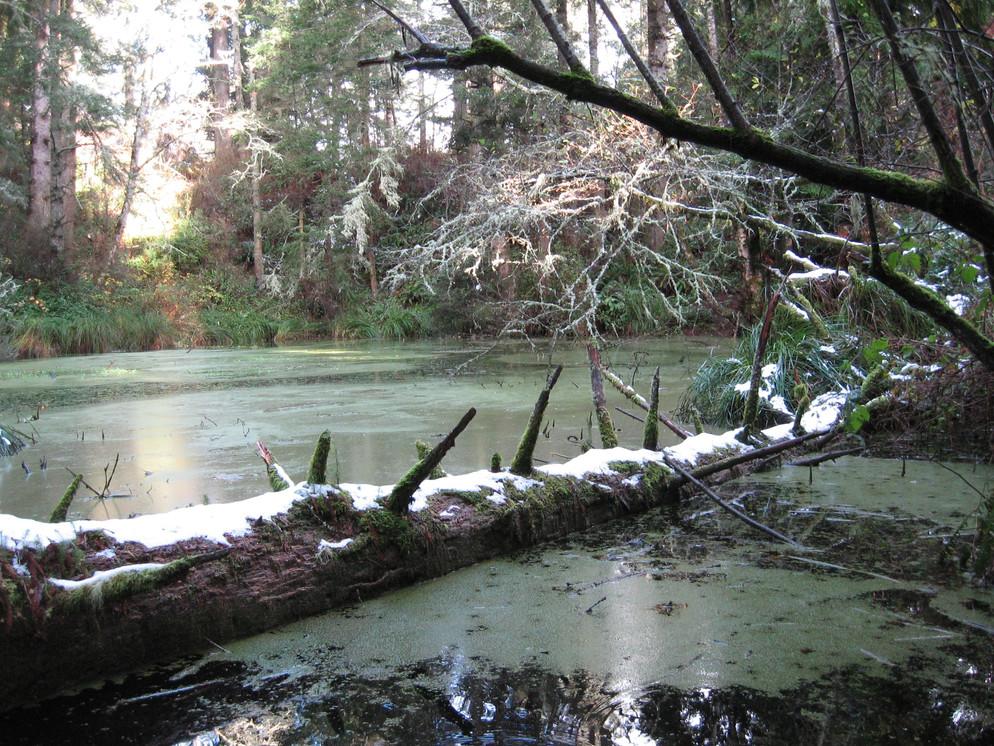 Scenic View of Humboldt Lagoons