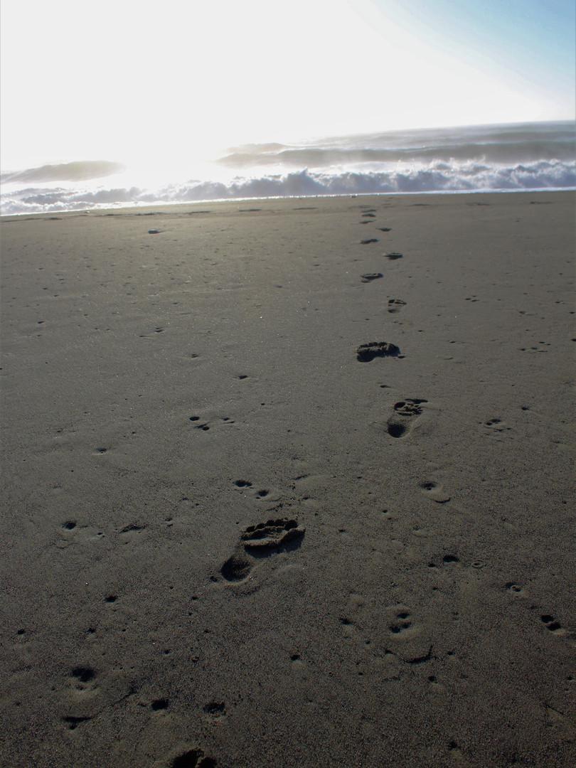 Centerville Beach, Ferndale CA