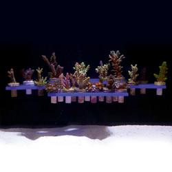ReefRack 32 Magnetic Coral Frag Rack