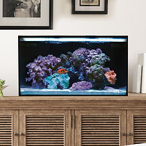 Fusion Pro 20 Gallon AIO Aquarium Deskto