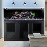 INT 200 Gallon Aquarium_APS Stand_1.jpg