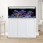 EXT 100 Gallon Aquarium_APS Stand_1 Whit