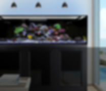 EXT Banner 1.jpg