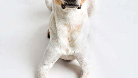 Ways to Ease Fear and Anxiety in your Pet