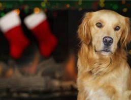 5  ways your life will change with a Christmas pup.