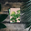 Botanical themed A6 mini print postcard of a Swiss Cheese Plant from the Orla Ros Retro House Plants range