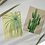 Two vintage style botanical mini print postcards of a Spider Plant and a Cactus Plant