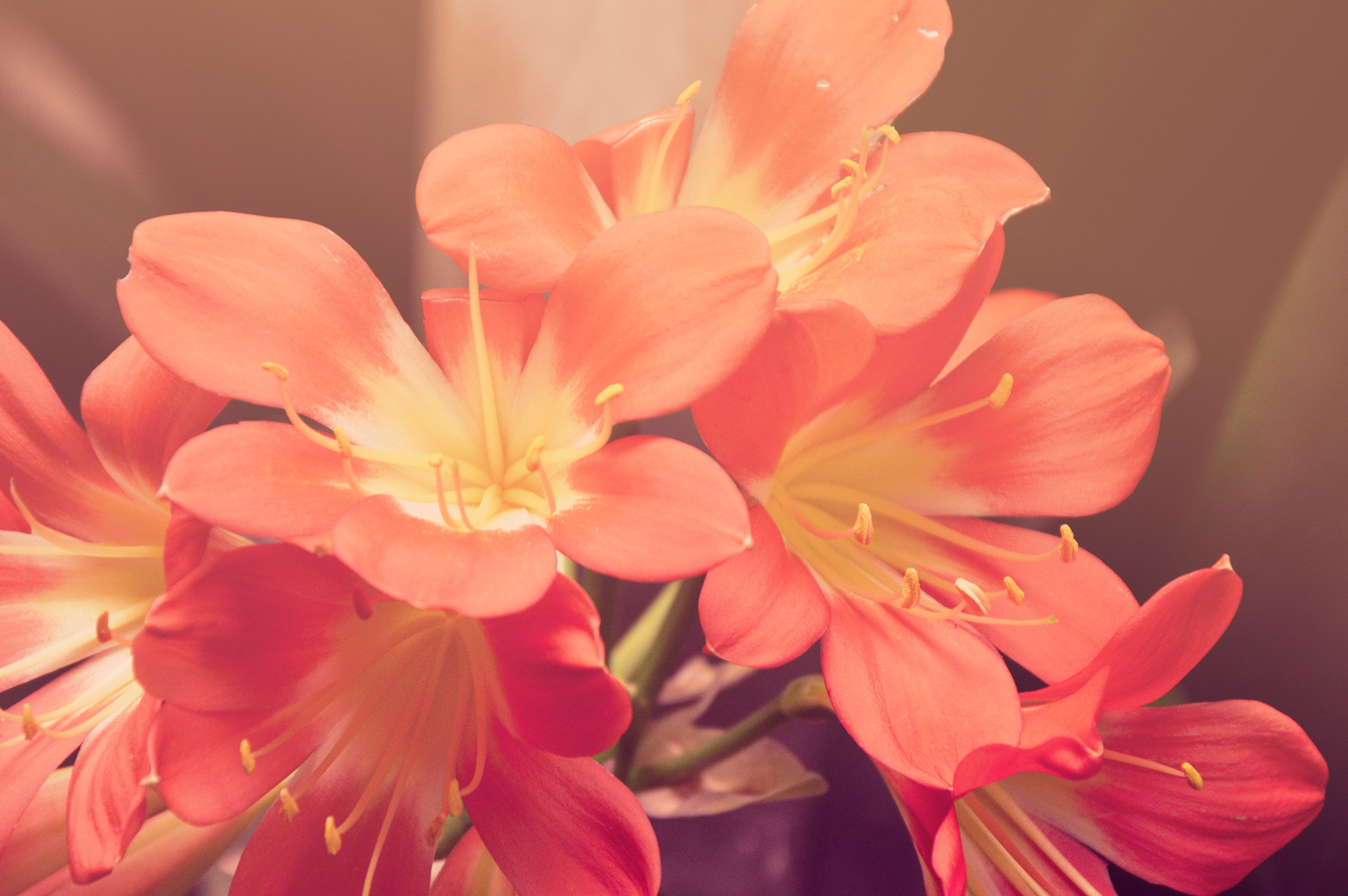nature-sunny-red-flowers