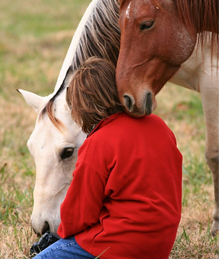dawn_horse_image_7png.png