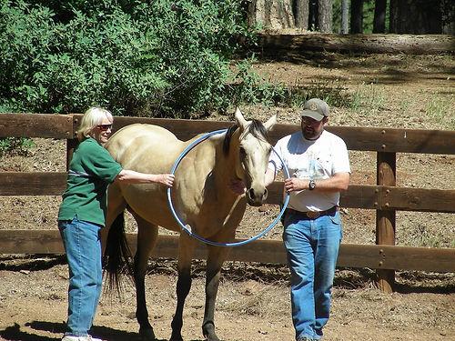hula hoop horse at EAGALA.jpg