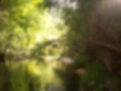 riverbeach 1.png