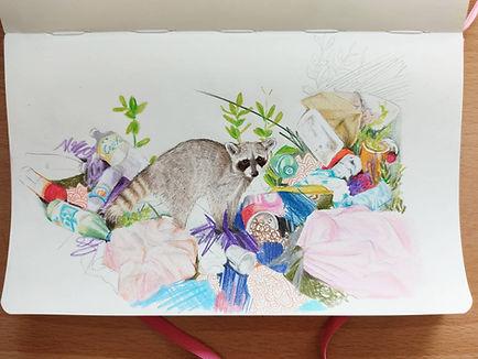 Racoon Sketch