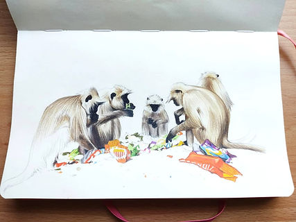 Monkey Sketch