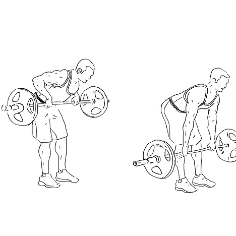 barbell row.png