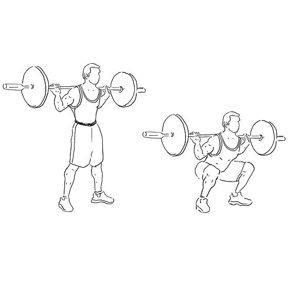 barbell squat.png