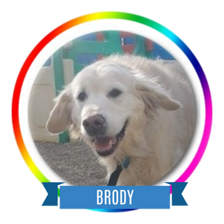 Brody C Icon.png
